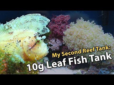 My Second Reef Tank - 10g Leaf Fish Tank (Year 2002)