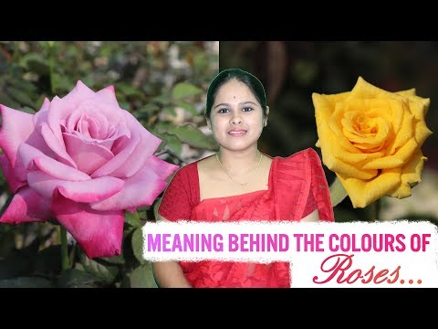 The Incredible Meaning Behind The Colours Of Roses