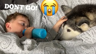 Husky Refuses To Leave Babies Side At Bedtime They Can't Stop Giggling! [CUTEST REACTION EVER!]