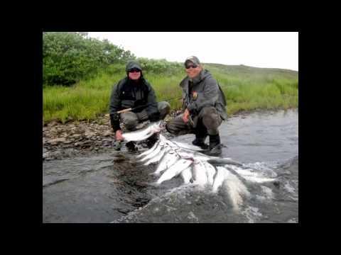 Fish Alaska Hot Silver Salmon