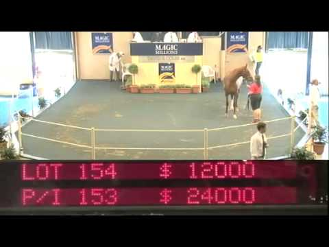 2013 Session 1 - Part 2 Adelaide Magic Millions Yearling Sale