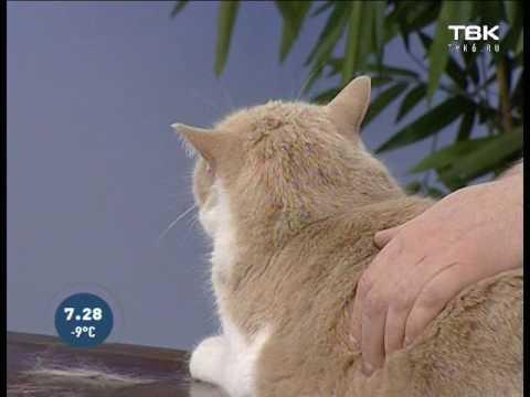 Почему кошки срыгивают еду