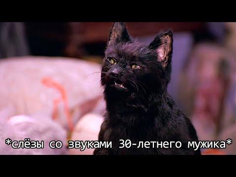 Если бы кошки могли говорить. Кот Сэлем, обычный домашний кот (Переозвучка)