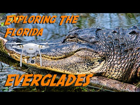 Exploring the Florida Everglades: Drone Footage