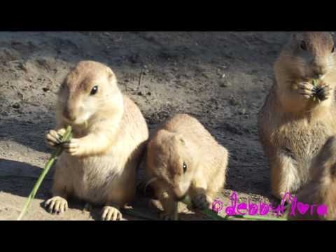Going to the Blijdorp Zoo in Rotterdam with the Ikea Family (25-06-2016) Full-HD