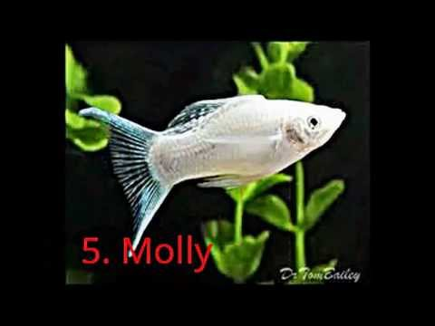 Top 10 best looking tropical fish for beginners youtube for Best fish tanks for beginners