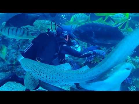 "[video] My Visit To ""dubai Aquarium!"" Fish Feeding"