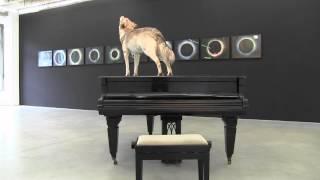 Vues d'expo : Douglas Gordon à la galerie Niels Borch Jensen (Berlin)