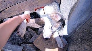 СБЕЖАЛА СОБАКА! достаём щенка из под забора