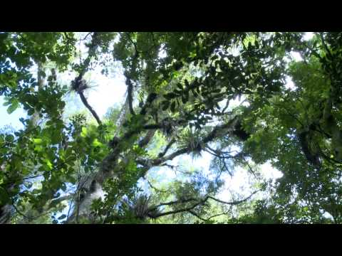 Mangakara Nature Walk