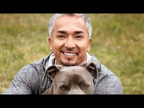 Download Youtube: The Untold Truth Of The Dog Whisperer