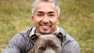 Download The Untold Truth Of The Dog Whisperer Mp3 and Videos