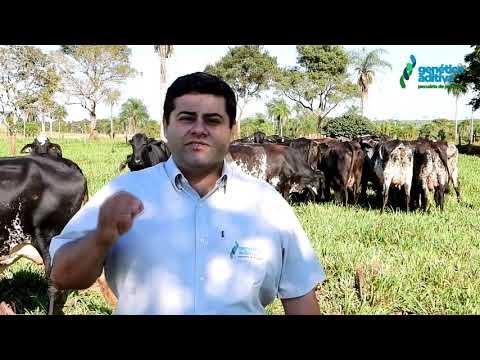 Convite do Flavio Sandim para o 5º Leilão Gir e Girolando