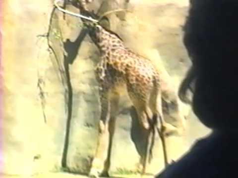 Charlene in Calif  1988 Aug
