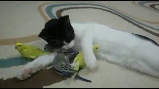 Птицы друзья не еда - смешное видео про котов