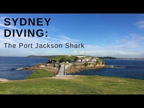 Sydney Diving :  Australia's  PORT JACKSON SHARK HD