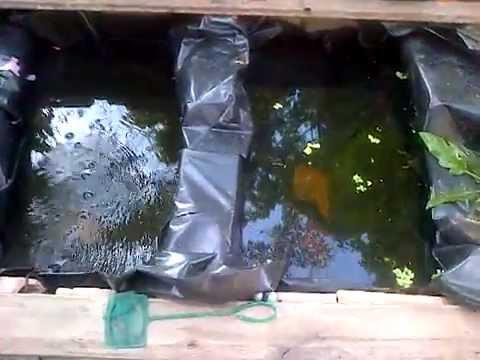 Super guppys venezuela estanque casero youtube for Estanques caseros