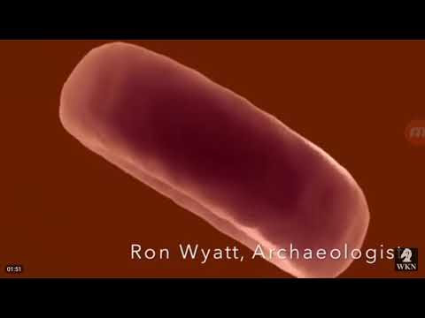 Must Watch! 23+1 chromosomes Jesus's Blood DNA Tested in Israel!  The blood was still Alive!