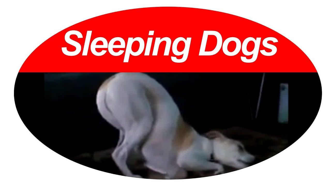 Can Dogs Sleepwalk