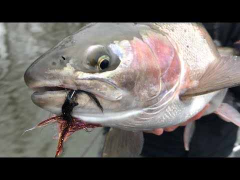 Swinging Flies For Steelhead With The Northern Angler