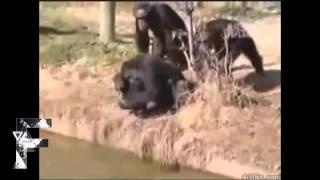 Коварные животные нападают на людей и друг на друга
