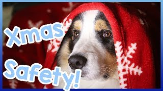 Dog Christmas Safety! Safety for Dogs at Xmas Time! - Christmas is ...
