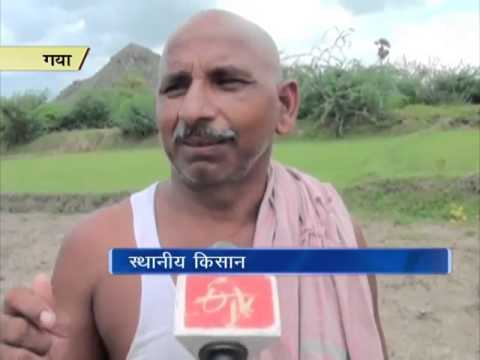 Bihar farmers in distress as meagre rainfall affects paddy crops