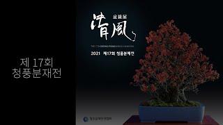 Korea bonsai exhibition 청주시에서 …