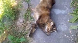 Кажется кошка заснула в прыжке! прикольный сон кошки в новом видео на канале YouTube
