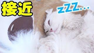 ちゃちゃマロの寝込みに急接近してみた!! thumbnail