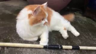 urchins play with cats - FUNNY