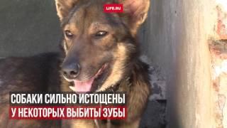 Мужчина устроил концлагерь для животных в Ростовской области