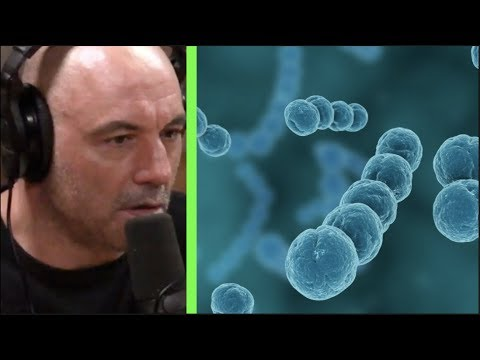 The Biggest Drivers of Infectious Disease | Joe Rogan & Peter Hotez