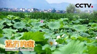 《远方的家》 20190725 长江行(19) 金沙江边话永胜| CCTV中文国际