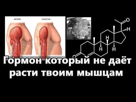 Этот гормон, мешает твоим мышцам расти. Прогестерон