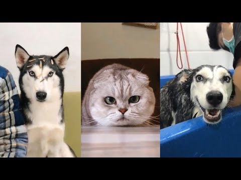 Cute Dogs and Cats | Funny Cats and Dogs Videos Compilation #14 | Cute Is Not Enough