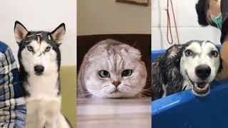 Cute Dogs and Cats   Funny Cats and Dogs Videos Compilation #14   Cute Is Not Enough