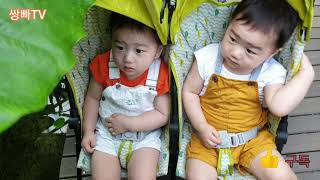 서울식물원 가족데이트  쌍둥이를 좋아해요  한번씩가보세…