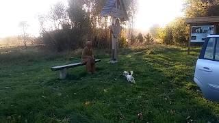 Собака оцінив майстерність скульптора