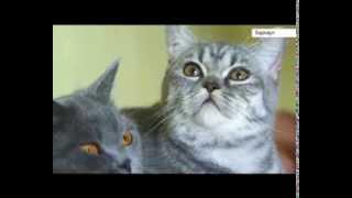 Барнаул: На что идут хозяева кошек, чтобы об их любимцах узнал весь мир?