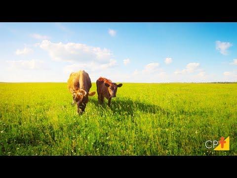 Clique e veja o vídeo Curso a Distância Recuperação de Pastagens - Método Direto