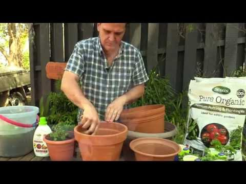 Grow Organic Potted Herbs