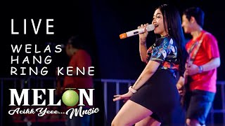 Download lagu Syahiba Saufa Welas Hang Ring Kene Koplo Live MP3