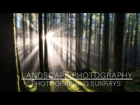 Landscape Photography | Photographing Sunrays in the Forest