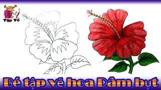 Bé tập vẽ Hoa dâm bụt theo mẫu | draw hibiscus flowers