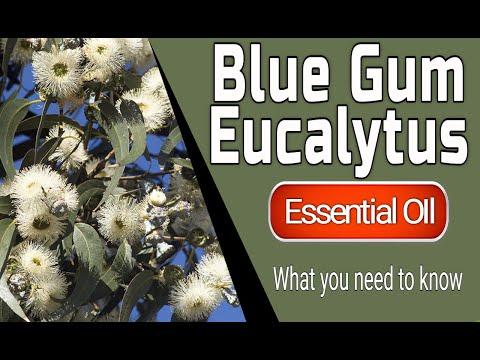 eucalyptus-blue-gum---eucalyptus-globulus,-essential-oil---how-to-use