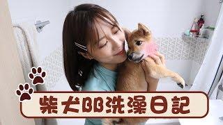 和柴犬bb洗澡挫折很大ㅠㅠ 照顧別人的狗狗日記 ft. mochi