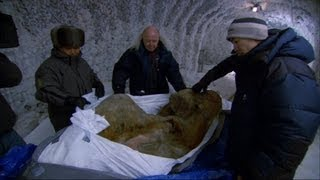 The Perfectly Preserved Frozen Yuka Mammoth Mummy - Woolly Mammoth: Secrets from the Ice - BBC Two