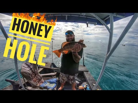 Hunting Fish For Food During Covid-19 Isolation - CORAL TROUT HONEY HOLE TOWNSVILLE AUSTRALIA