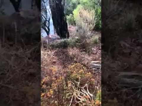 Πυρκαγιά από πτώση κεραυνού στο Πραστείο Κελλακίου 15/10/2019